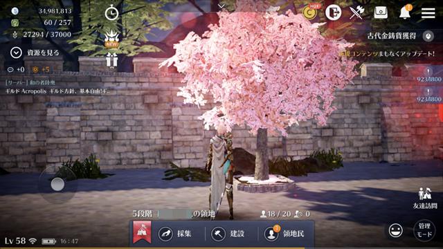 桜の苗木が成長